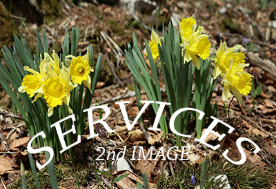 Services_Jonquilles